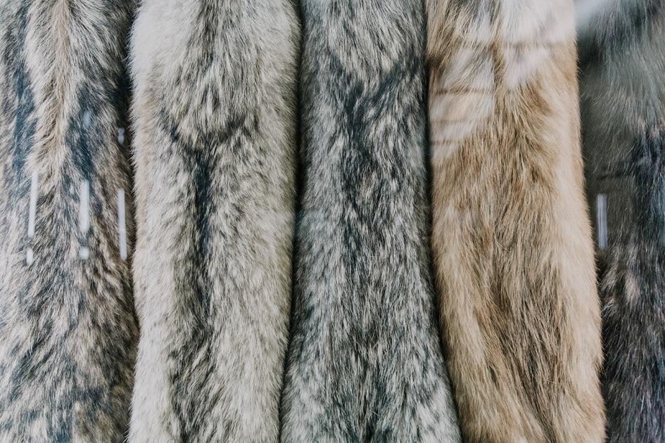 Chinchilla and Fox Furs: The Next Fashion Trend